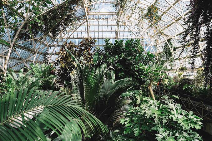 The Botanic Gardens remain a surprising treat in the heart of the city (Photo provided by Tom Kerr)